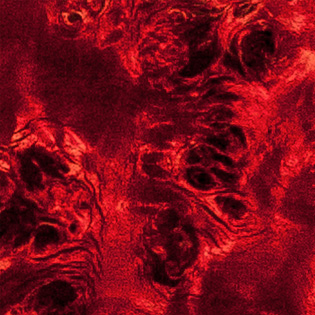 Liquid Red - Eye Poplar