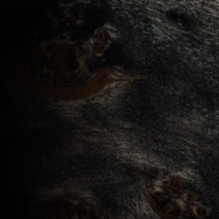 Black Burst (Eye Poplar)