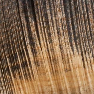 Black Feather - Flamed Maple